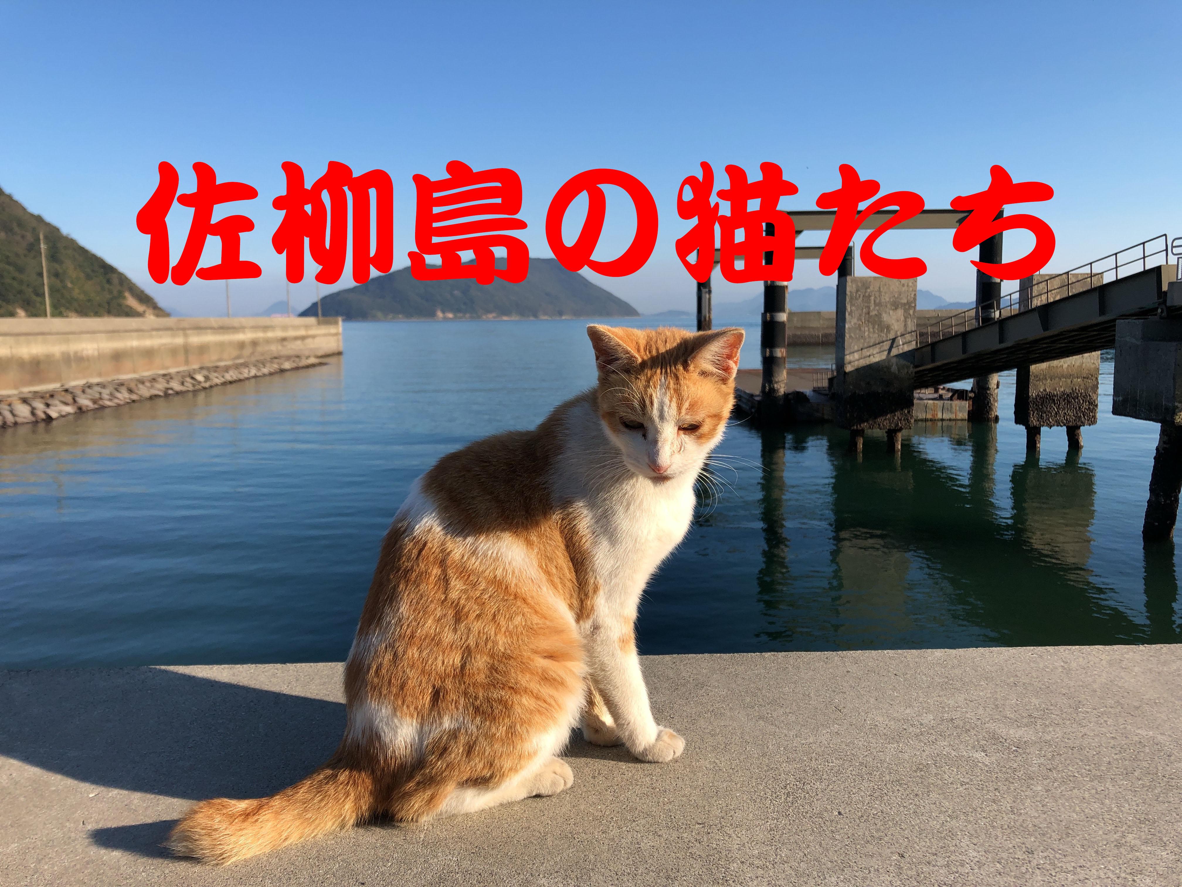 佐柳島2018】猫たちに会いに佐柳...